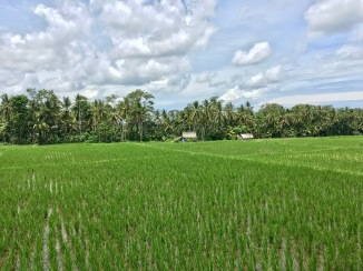 More rice paddies from our AirBnb.