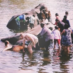 Matt and 15 Indians bathing an elephant. The elephant did actually seem to enjoy it.