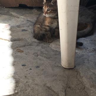 A kitten!!