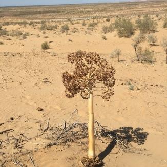 The desert was so hot.