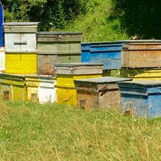 The hive boxes were so colorful.