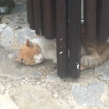 Another restaurant kitty!!! He was slepy.