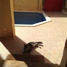 Ħal's friend, we called 'The Gray Kitty'.