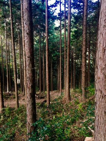 This forest is where I saw the wild boar....