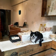 Japanese shop cat. I loved this guy.